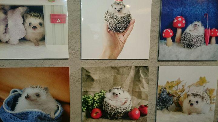 小さな体に癒される。名古屋と東京で「まるっと小動物展」開催