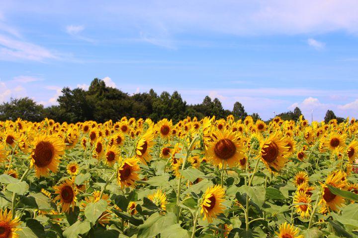 """休日は家族でお出かけ!家族連れがこの夏行くべき""""神奈川""""のスポット7選"""