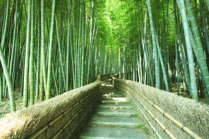 嵐山の人気観光地10選!どの季節でもカメラに収めたい絶景をご紹介
