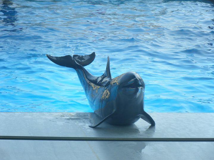 九州を代表する水族館「マリンワールド海の中道」でしたい5つのこと