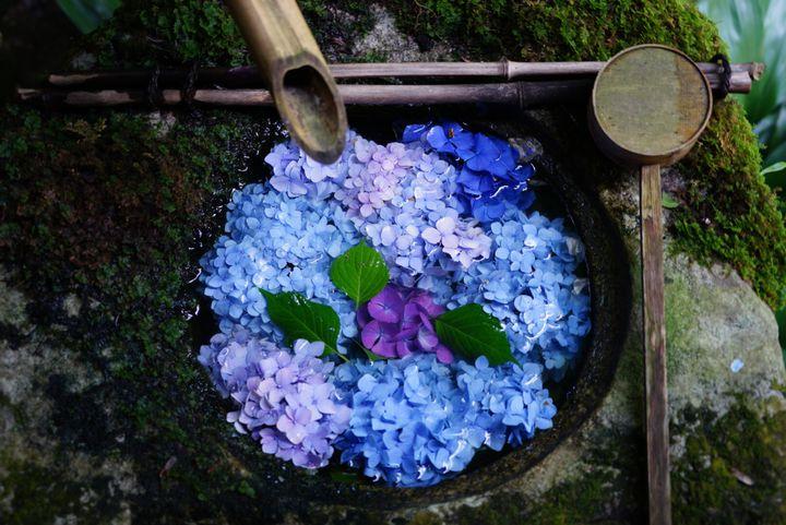 今どき神社の美スポット!関西地方の「花手水」がみられるスポットまとめ