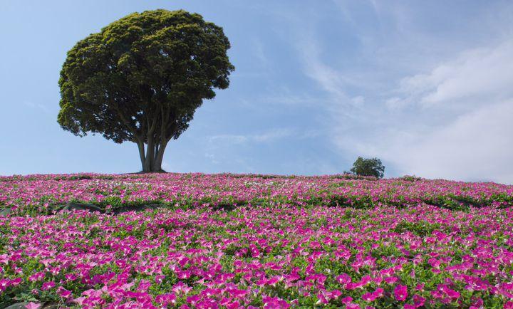 カップル必見!充実した1日を過ごせる千葉県の人気おすすめデートスポット12選