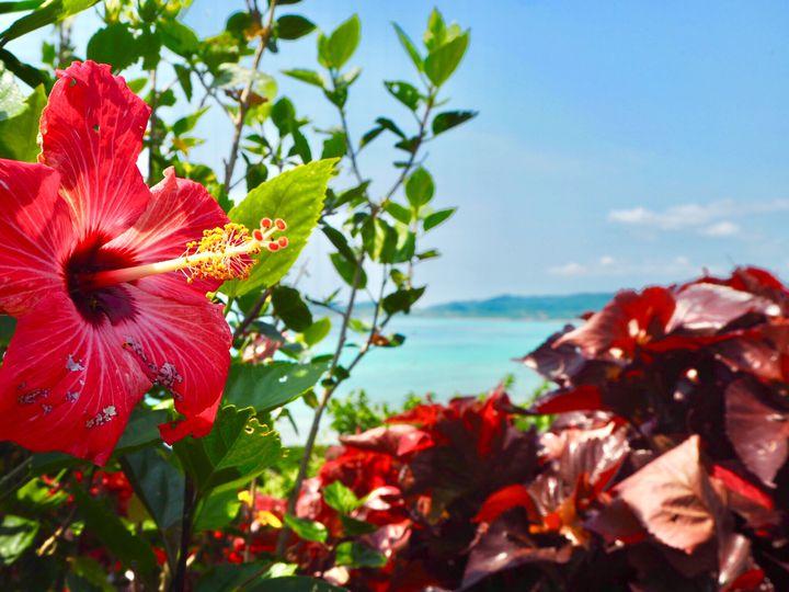ビーチ以外も見どころ満載。石垣島のおすすめ観光スポット7選