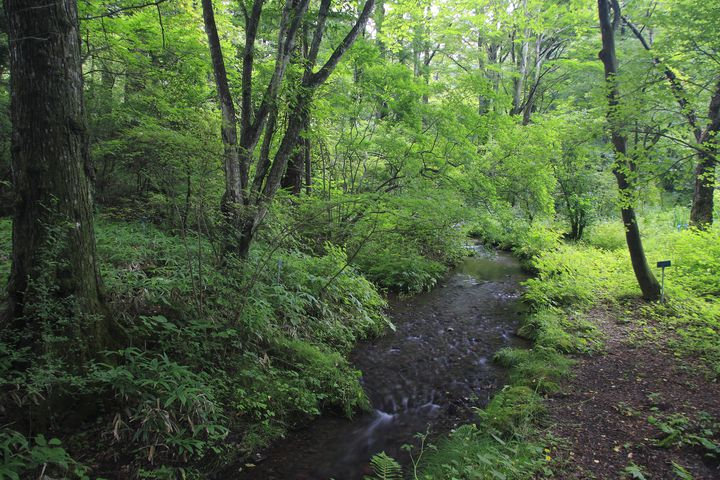 素晴らしい渓谷美と紅葉に石仏や石塔を楽しめる憾満ヶ淵に行ってみよう!