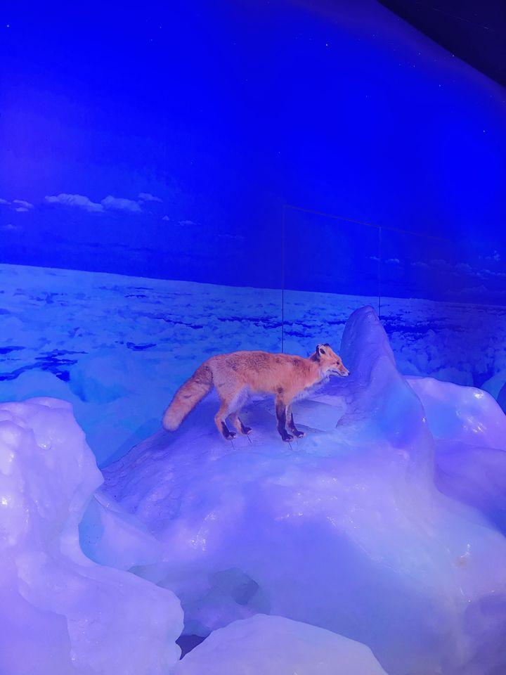 まさかの極寒体験!北海道「オホーツク流氷館」で体験したい5つのこと