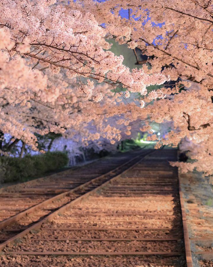 """春がきた、そうだ、京都に行こう。京都の""""満足度120%""""の春旅スポットまとめ"""
