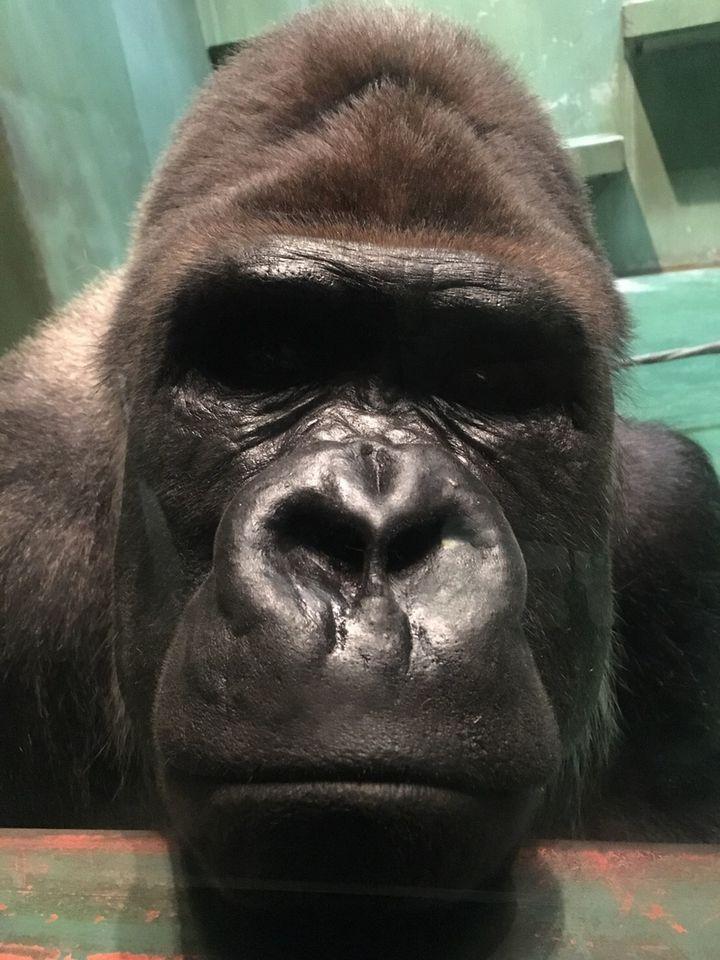 次の週末はどこに行こう?関東で人気の動物園ランキングTOP15