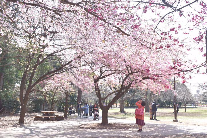 1位は誰もが納得の桜の名所!関東人気お花見スポットランキングTOP10