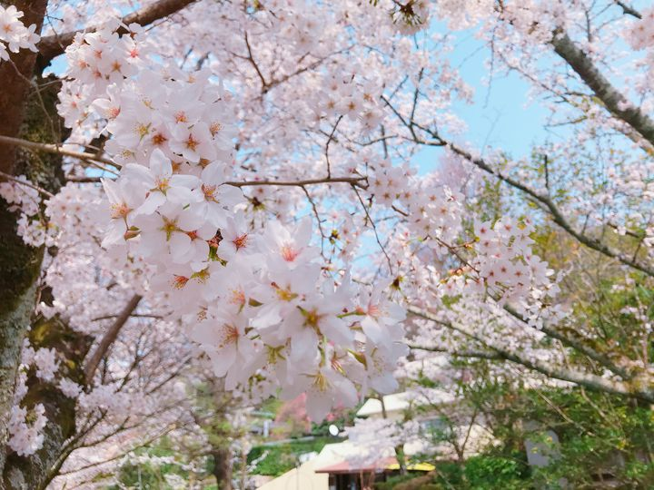 """桜も笑顔も満開に!""""春の京都旅行""""で絶対に外せないおすすめスポット12選"""