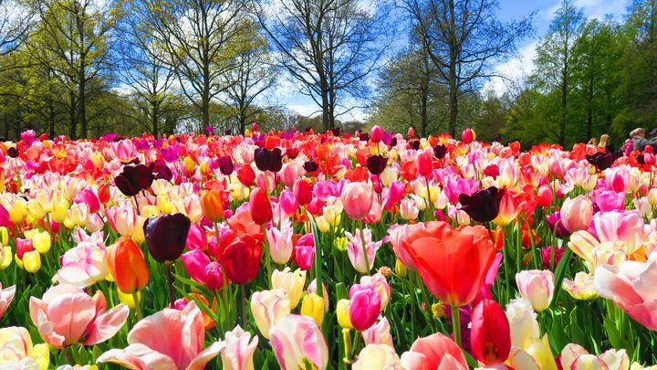 春の風物詩を楽しもう!2019春のトレンド国内&海外旅行先7選