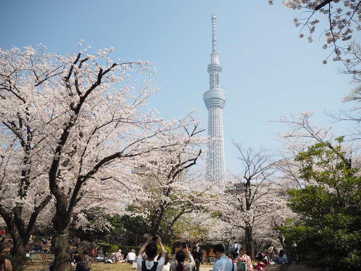 桜の季節真っ盛り!近くで着物を借りてお花見を楽しめる東京都内の桜の名所7選