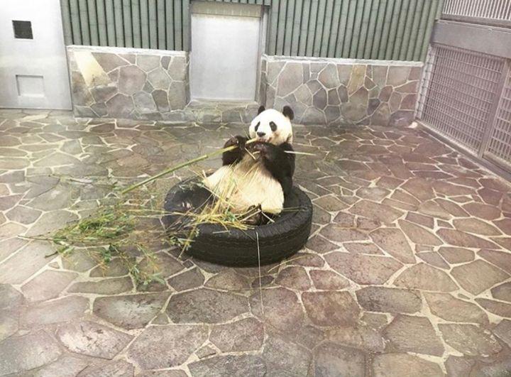 パンダに会いに行こう!「神戸市立王子動物園」でしたい5つのこと