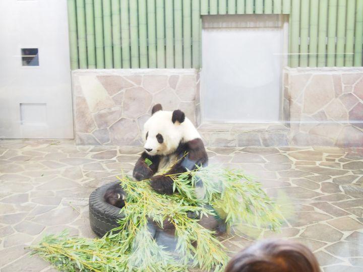 動物を見られるだけじゃない!「王子動物園」をより楽しむ7つの方法