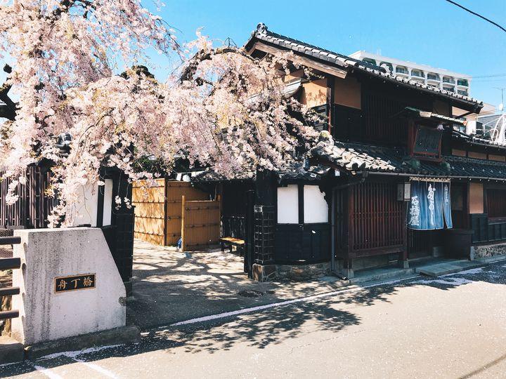 知る人ぞ知る仙台の桜の隠れた名所!?駄菓子屋「石橋屋」の桜がすごい!