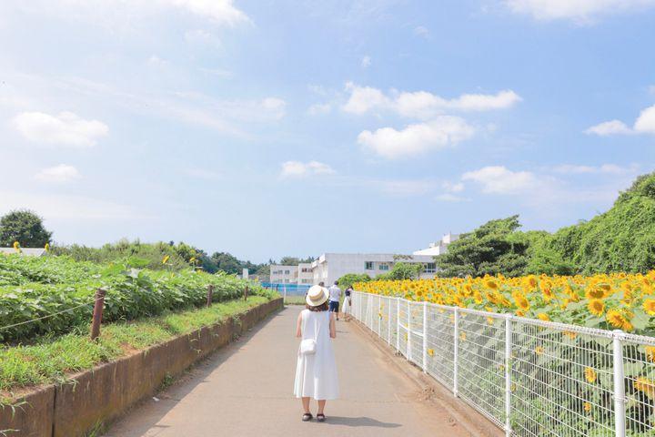 """この夏、君と絶景に恋をする。日本国内にある""""夏を感じる""""美しき絶景7選"""