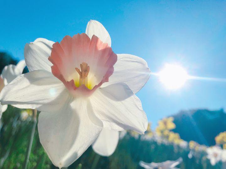 """ネモフィラやバラなど。春のお花に魅了される""""関東地方の今週したいこと""""7選"""