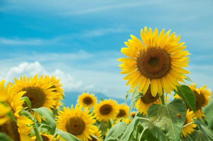 """忘れられない夏にしよう。日本国内の美しすぎる""""夏の絶景""""29選"""