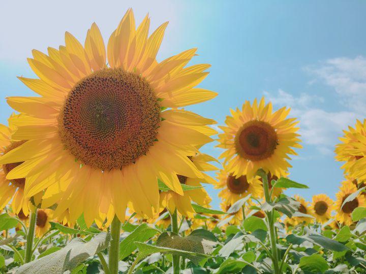 涼しい高原で思いきり遊ぼう!暑い夏でも行きたい北杜市観光7選!