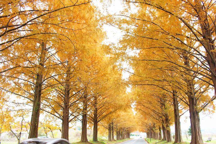 【超厳選】目を疑うほどの絶景に出会う旅。関西の美しすぎる至極の紅葉名所10選