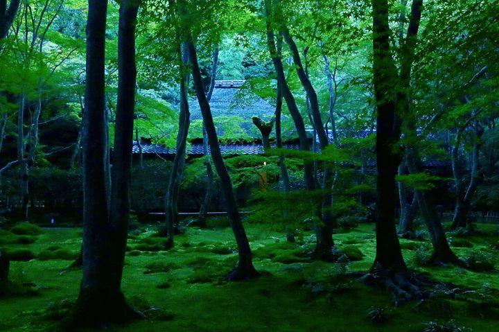"""雨に濡れると、より美しくなる街。""""梅雨の京都""""で訪れたい13のスポット"""