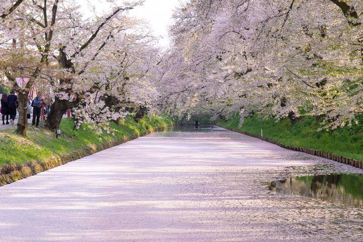 ゴールデンウィークが見頃かも!青森県で「弘前さくらまつり」開催決定