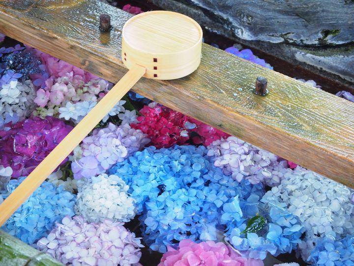 """幻想的な梅雨の景色!息を呑むほど美しい日本全国の""""紫陽花の名所""""14選"""