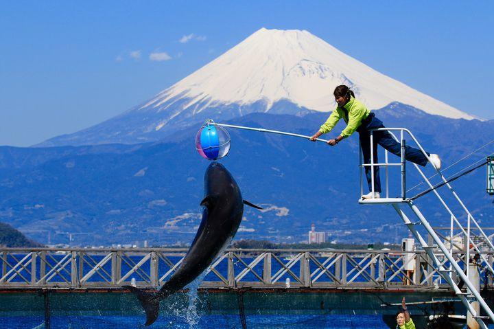 【終了】子供から大人まで楽しめる水族館の体感イベント「淡島夏祭り」が今年も開催