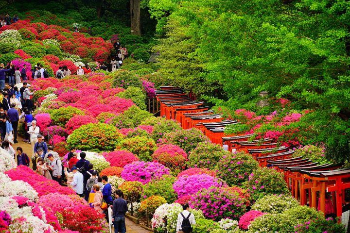 """桜の次は何を見る?大切な人と見たい関東地方の""""ツツジの名所""""12選"""