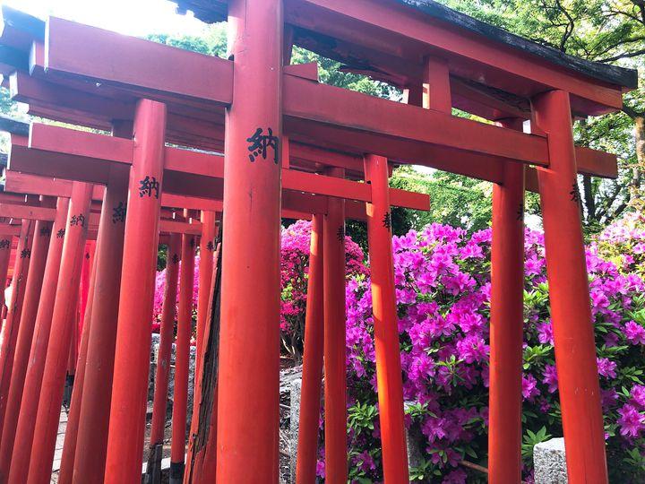 """鳥居とつつじの絶景コラボ!東京都・根津にある""""根津神社""""がとってもおすすめ"""