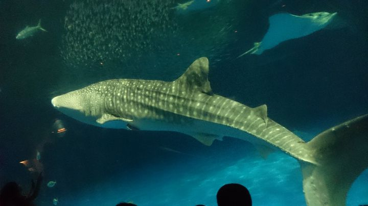 九州最大規模の水族館!「いおワールドかごしま水族館」でしたい5つのこと