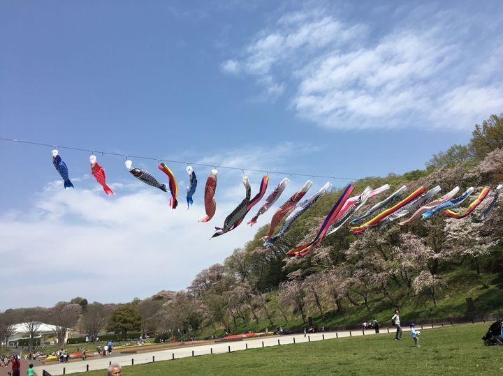 横浜で子供をのびのび遊ばせたい!こどもの国ですべき5つのこと