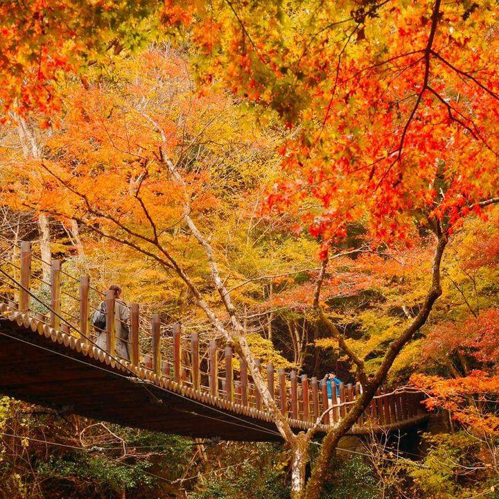 """肌寒い季節には温かみのある紅葉を。""""11月に見頃を迎える""""紅葉スポット25選"""