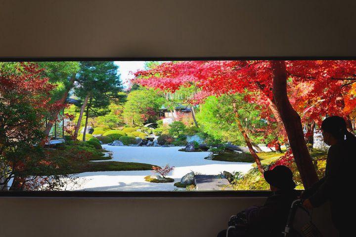 これぞ、日本の趣。島根県「足立美術館」の紅葉が11月中旬より見ごろに