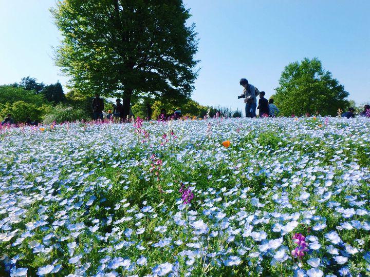 2人きりで過ごす春デート。話題の「国営昭和記念公園デート」プランはこれだ