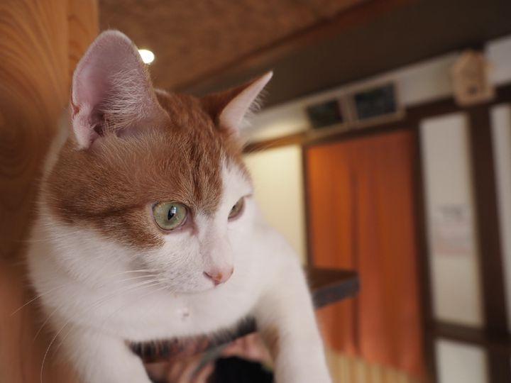 """もう帰りたくない!猫好きオススメ日本国内の""""猫と過ごせる宿""""7選"""