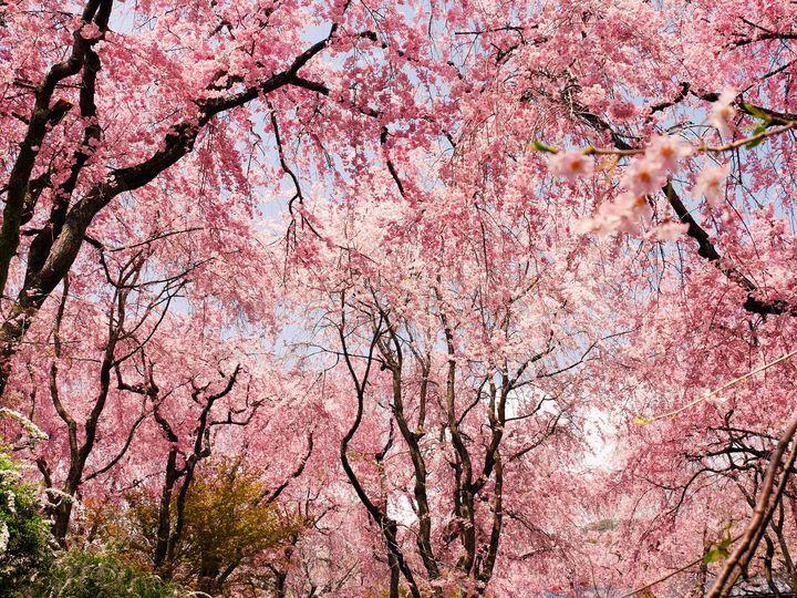"""一人旅で見たい絶景。色彩美しい""""春が見頃の絶景""""10選【近畿・四国編】"""