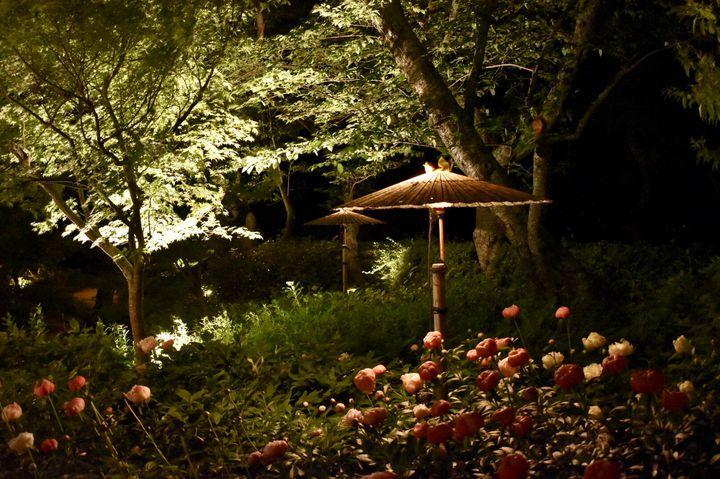 光と自然の幻想的なコラボ。「TOKIWA ファンタジア2020」開催
