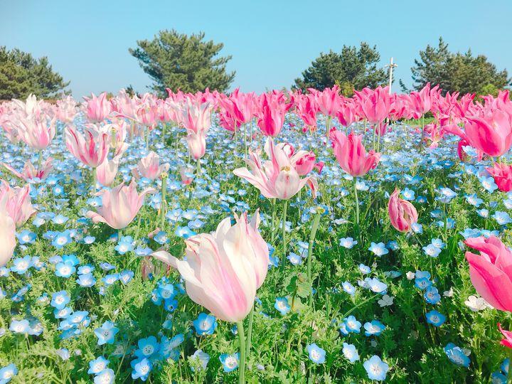 絶景とグルメをご紹介!関西地方で今週したい6つのこと。